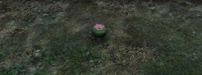 Yeşil Peyote Bitkisi